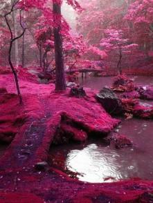 moss-garden-kyoto-japan