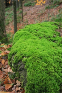 moss-outdoors-on-rock